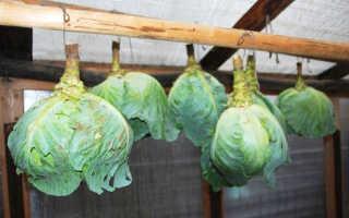 Хранение капусты в пищевой пленке на зиму: можно ли и как хранить свежий овощ в пищевом полиэтилене в погребе