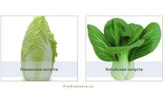 Как хранить пекинскую капусту в домашних условиях: свежей в холодильнике, можно ли замораживать на зиму, каков срок хранения овоща?