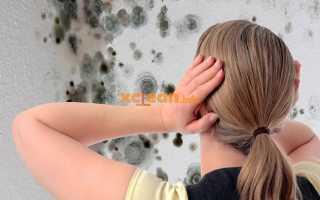 Как убрать плесень с обоев на стене в комнате, квартире в домашних условиях своими руками: народные и химические средства