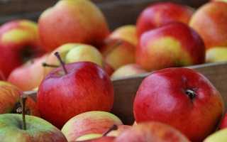 Как хранить яблоки на балконе осенью и зимой, при какой температуре должно осуществляться хранение урожая?