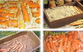Хранение моркови в пакетах (полиэтиленовых, вакуумных, вместе со свеклой, мытую и т.д.): можно ли и как хранить?