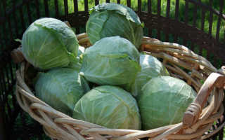 Когда убирать капусту на хранение на зиму: как правильно и при какой температуре нужно и можно собирать урожай с