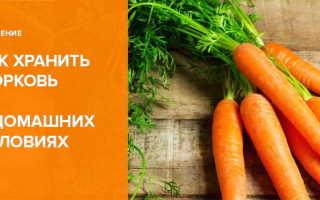 Как хранить морковь в домашних условиях: как правильно и где лучше в городской квартире, чтобы не завяла, условия и