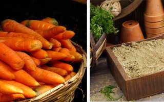 Как подготовить морковь к хранению на зиму: выбор места и тары, важные этапы подготовки урожая