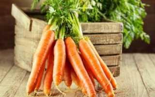 Уборка моркови на хранение на зиму: когда и как правильно убирать с грядки, как подготовить овощ, где и в