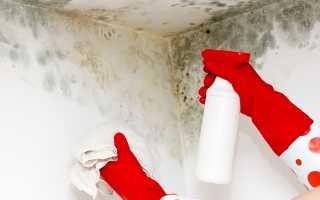 Как убрать плесень в квартире со стен своими руками: как удалить народными средствами, чем и какими химсредствами вывести в