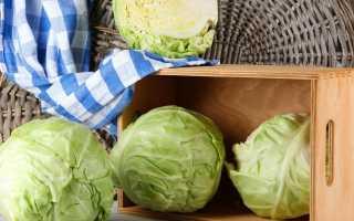 Как хранить капусту в домашних условиях: условия хранения свежего овоща в квартире зимой, как правильно и где разместить дома?