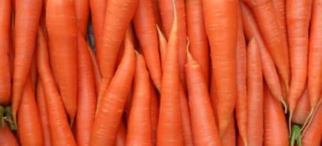 Как сохранить морковь в земле до весны, как правильно организовать хранение корнеплода на всю зиму: способы и методы