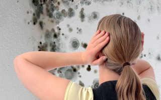 Как удалить черную плесень со стен в комнате или квартире: вывести грибок домашними средствами, как удалить при помощи специальных