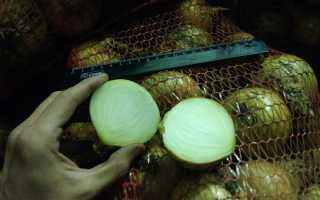 Можно ли лук хранить в погребе или подвале (репчатый и другой): как организовать правильное хранение овоща зимой?
