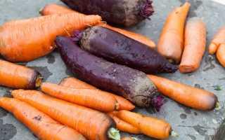Температура хранения моркови: при какой можно хранить зимой, хранится ли вместе с луком и чесноком, свеклой?