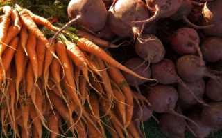 Как сохранить на зиму свеклу и морковь: где лучше организовать хранение, как правильно в домашних условиях, можно ли в