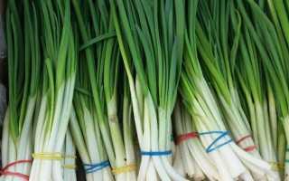 Как сохранить зеленый лук свежий в холодильнике долго: способы хранения, чтобы зелень как можно дольше оставалась сочной