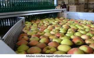 Чем обрабатывают яблоки для длительного хранения: способы и средства обработки фруктов в домашних условиях
