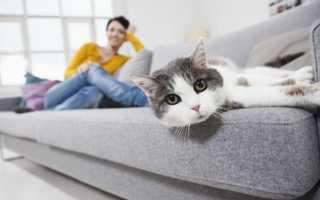 Как убрать запах мочи с дивана в домашних условиях: чем отмыть пятна и удалить неприятный аромат с обивки из